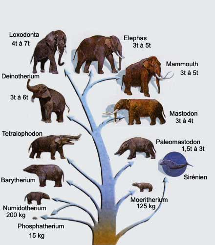 arbre_elephants.jpg